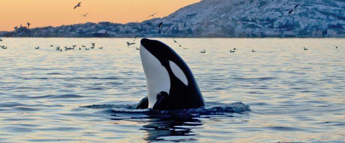El faro de las orcas o ¿qué estamos haciendo del ser humano?